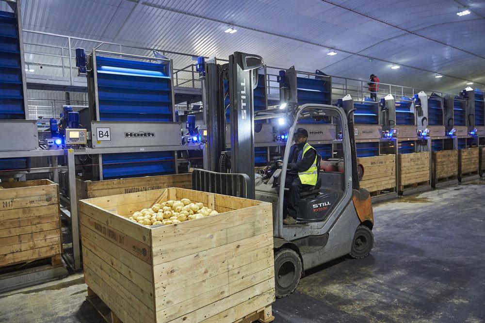 Lincoln potato supplier offers temporary jobs