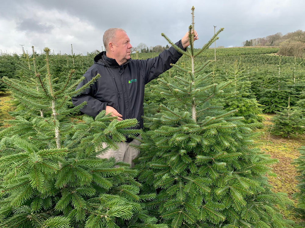 Largest Christmas Tree plantation in UK leading the way with unique eco-friendly recycling programme