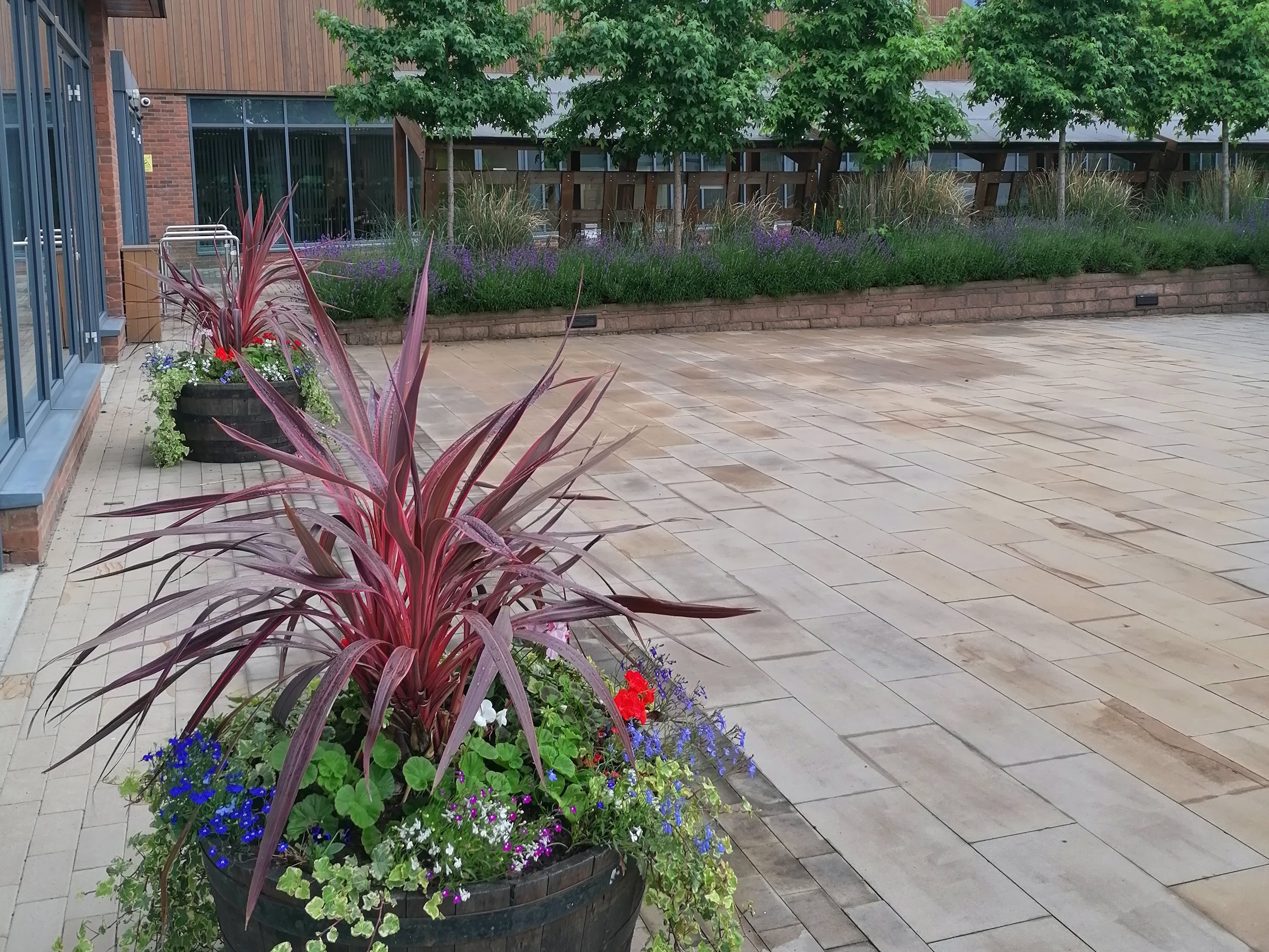Blooming Success For DCG's Ilkeston Community College