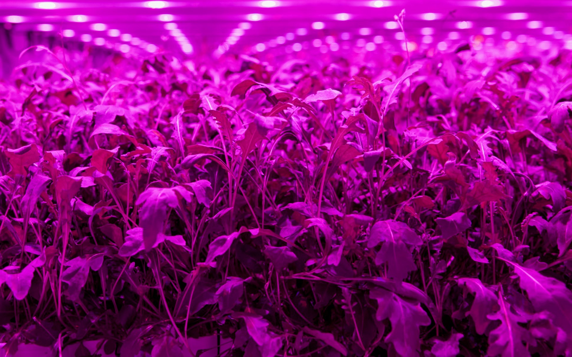 Derby AgriTech start-up wins Innovate UK funding to develop ground-breaking sensor technology for vertical farming